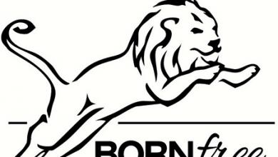 Photo of Born Free Mulls Adding Aqua-Hot as Permanent Fixture