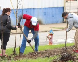 Photo of Community: LCI Plants Trees for Arbor Day